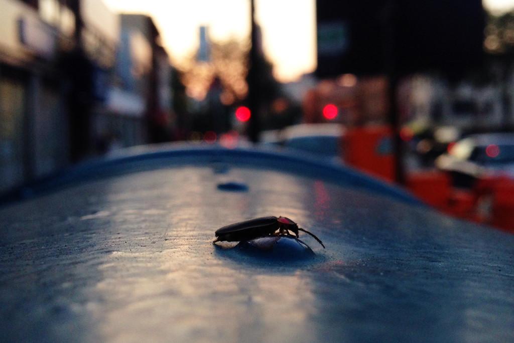 firefly on mailbox